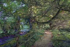 Camino en el Bosque  - Irlanda (Antonio-González) Tags: camino bosque irlanda ireland forest road