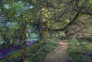 Camino en el Bosque  - Irlanda