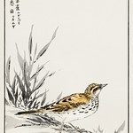 Chinese Tree-Pipit and Wheat illustration from Pictorial Monograph of Birds (1885) by Numata Kashu (1838-1901). Digitally enhanced from our own original edition. thumbnail