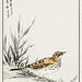 Chinese Tree-Pipit and Wheat illustration from Pictorial Monograph of Birds (1885) by Numata Kashu (1838-1901). Digitally enhanced from our own original edition.
