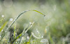 the weight of the world (Emma Varley) Tags: dew morning sparkling pretty droplets jewels water grass refraction world globe blade