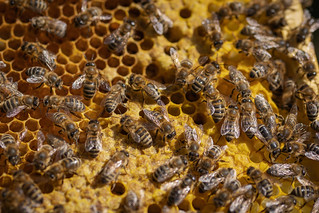 My hard working Ladys building a nursery - Meine fleißigen Bienchen bauen einen Kindergarten