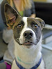 Rio (2) (AbbyB.) Tags: dog canine rescue adopt animal shelter pet mtpleasantanimalshelter easthanovernj petphotography shelterpet