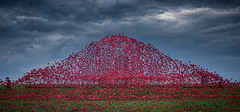 Poppy wave at Fort Nelson 5- (jdl1963) Tags: red poppy poppies enamel wave sculpture portsmouth hampshire fort nelson world war remembrance tribute flower sky high dynamic range hdr nikon d810 portsdown hill solent
