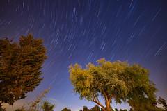 Tel Hadid, Israel (Noctræon) Tags: night nightly midnight sky blue tree star stars startrail northstar north d850 sigma14mm nikon sigma