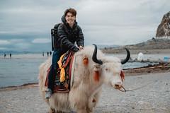 The Dzo Rider (little_stephy0925) Tags: fujifilm fuji fujifilmxt2 xt2 fujixt2 fujinonxf50140mm xf50140mm classicchrome dzo tibet namtso 纳木错 mirrorlesscamera 西藏 china whitedzo hybrid riding travel potrait