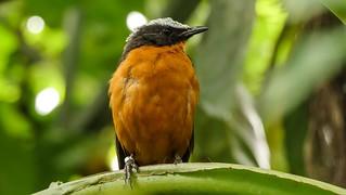 Bird - 5460