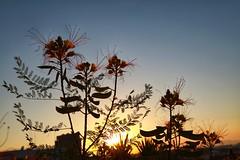 Before Sunset (8) (Polis Poliviou) Tags: nicosia lefkosia street summer capital life live polispoliviou polis poliviou πολυσ πολυβιου cyprus cyprustheallyearroundisland cyprusinyourheart yearroundisland zypern republicofcyprus κύπροσ cipro кипър chypre chipir chipre кіпр kipras ciprus cypr кипар cypern kypr ©polispoliviou2018 streetphotos europe building streetphotography urbanphotography urban heritage people mediterranean roads afternoon architecture buildings 2018 city town travel naturephotography naturephotos urbanphotos neighborhood