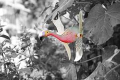 Flamingo (Von Noorden) Tags: bokeh horror noiretblanc einfarbig wand black white blackandwhite bw sw schwarzweiss germany schwarz weiss weis schwarzweis shade monochrome plain colour colours animal eye eyes wings wing nature natur summer selective selektiv dark door glass window tier pet colouring experimental farbig farbe color flamingo bird plastic plastik vogel pink flamingoes birds letter fleming tiere statue