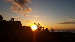 Sunset entre les feuillages (Christian Chene Tahiti) Tags: samsung s7e téléphone mobile flore tahiti pf polynésiefrançaise frenchpolynesia arue silhouette hauteur plante feuillage feuille bleu jaune paysage landscape crépuscule soleil coucherdesoleil sunset ciel nuage mer