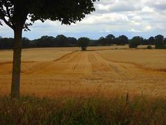 erste Arbeit ist getan (Sophia-Fatima) Tags: zarrentin mecklenburgvorpommern deutschland ernte kornfeld getreide stroh