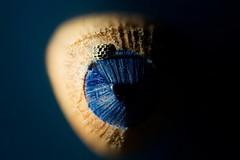 A space cowboy.... (Altazur) Tags: pencil blue 7dwf