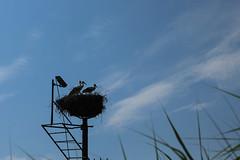 Smile! You're on CCTV (JaviGM67) Tags: naturaleza pajaro animal nido urdaibai bizkaia euskadi cigüeña