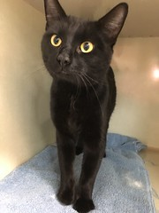 Panther - 1 1/2 year old neutered male