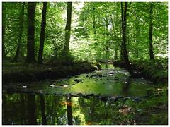 Écouves Forest (M.L Photographie) Tags: forêt forest orne arbre arbres tree trees river rivière bois woods france coolpix p900 nikon nature normandie normandy