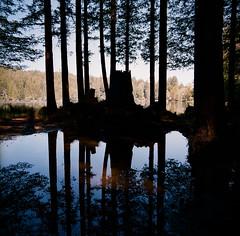 Loch Lomond (bior) Tags: lochlomond benlomond felton santacruzmountains lake loch reservoir square hasselblad500cm portra400 portra kodakportra mediumformat film 120 6x6cm