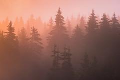 SAM_2957-2 (Apostol Dragiev) Tags: родопи rodopi rodopimountain mountain forest sunrise fog morning