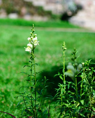 Cranbrook House & Gardens (MR313Evo) Tags: bloomfieldhills michigan cranbrookhousegardens
