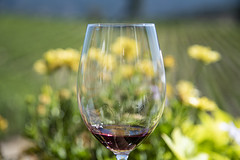Sipping the vino (jbarc in BC) Tags: wine glass tasting vineyard okanagan bc red redwine summer flowers sips dof bokeh blur