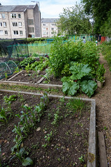 Scotlands Gardens June 2018 -118 (Philip Gillespie) Tags: scotland gardens 2018 nature flowers plants people men women kids children family boys girls vegetables fruit strawberries gooseberries potato roses lettuce shrubs hose green yellow red purple blue white black water urban city canon 5dsr hats berries leaves branches trees plot gnome reflection door wall park dolls nets small tiny beautiful pretty sweet steps stairs bee wasp flight circle street sale buildings inner