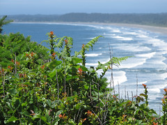 IMG_4901a (Kabbri) Tags: nature landscape foliage greenery leaves branches stems blossoms flowers flora conifers evergreen sea sky haze hazy blue summer water travel panorama ocean surf waves view scenery coast california green beach land tourism sand background outdoor beautiful vacation panoramic scenic tropical day color beauty