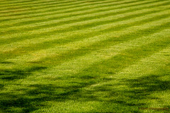 184/365 - Wellbedone (roblee.photography) Tags: lifeatsky grass lawn mowed shadows striped summer turf project365 project365184 project36503jul18 2018 july canoneos6d ef24105mmf4lisusm pictureaday photoaday oneaday