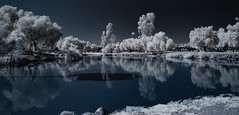 Tree Reflections and Shadows At Lindo Lake - Infrared (Bill Gracey 20 Million Views) Tags: infrared infraredphotography ir convertedinfraredcamera lindolake lakeside reflections shadows nature naturalbeauty surreal highcontrast