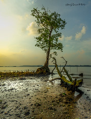 The Giant Grasshopper (melvhsc100) Tags: nature seascape sky clouds beach rod bluesky tree sand sunset pasirrisbeach singaporenicescenery lowtides nikon7200 nikon1024mm