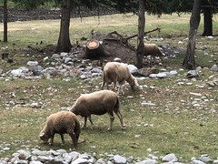 Aosta A023. (Joanbrebo) Tags: naturaleza natura nature animales animals iphone365 iphonex italia valled'aosta cogne