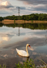 Tundry Pond revisited (stewartl2010) Tags: other colorefexpro4 summer dogmersfield nikfilters calm swan portraitformat water hampshire tundrypond peaceful evening pylon uk reflections england unitedkingdom gb
