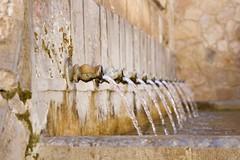 Tesoro: Simetría (AriCatalán) Tags: simetría fuente font caños agua water bebedero juegolvm escueladejackie