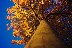 Face B (Atreides59) Tags: nord france nuit night bleu blue jaune yellow rouge red nature arbre tree ciel sky lumière lumiere light pentax k30 k 30 pentaxart atreides atreides59 cedriclafrance