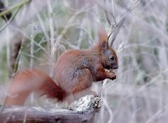 The well hidden Breakfast (pianocats16) Tags: squirrel cute hidden park eating
