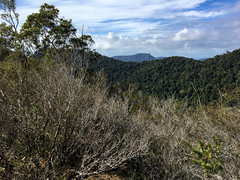 En route to The Pinnacle ([S u m m i t] s c a p e) Tags: springbrooknationalpark hiking trailrunning springbrook queensland australia
