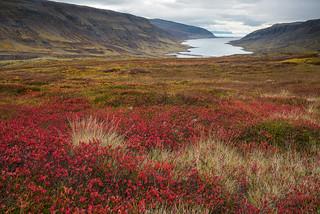 Breiðidalur and Kvígindisfjörður, Westfjords, Iceland