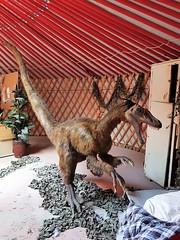 Un Vélociraptor Au Dinozoo Du Zoo Granby. 2018 06 30 17:45.40 (Sandbanks Pro) Tags: granby quebec canada zoogranby zoo dinozoo velociraptor crétacé jurassic prehistoric dinosaure animal nature touristique ville city summer été