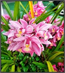 Cores da natureza. #flores #flowers #orquideas #orquidea #naturalbeauty #natureza #naturephotography #jardim #floreslindas #revistaxapury #eunotg #criacaodedeus #obradivina #instaflowers #instaflores #motox2 #instamotox2 #garden #floricultura #intagram #i (ederrabello2014) Tags: floricultura instamotox2 motox2 naturephotography instalike instagrambrasil flowersofinstagram naturalbeauty eunotg orquideas natureza obradivina orquidea jardim instaflores flowers floreslindas flores revistaxapury flowerstagram flowersbouquet momentosregistrados intagram criacaodedeus flowerslovers orchids instaflowers garden orchid orchidpurple