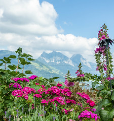 Garden with a view (ivanstevensphotography) Tags: flowers leaves leaf bloom colour grass clouds sky mountains mythen switzerland steinerberg steinen
