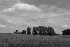 Près de Kemmel (RW-V) Tags: canoneos70d canonefs35mmf28macroisstm westhoek flandre vlaanderen belgië belgique belgium hiking bw nb sw zw noiretblanc monochrome heuvelland landscape paysage landschap sooc 100faves 150faves 175faves 200faves 225faves 250faves 275faves 300faves