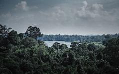 MacRitchie Reservoir, Singapore. 2018 (Mambo Ferido) Tags: film 35mm olympus nature mood landscape explore singapore moody om4ti 3570