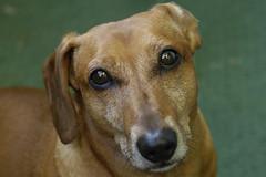 Wuz (petra.wruck) Tags: hund hunde dog dogs säugetiere mammals mammal mammalian tiere animals