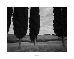 Tuscany.... (19Mauro64) Tags: martphotography monochrome tuscany walkingtour lightshadow lichtkunst landandcountry riflessifotografici cipressi passaggio arte art structure silverefex freeform xt1 xf14mm28 graytones cretesenesi siena lichtordnung vision view valle village bw bianconero nature