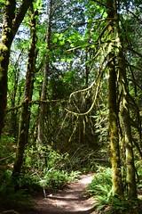 DSC_0343 (gtsieg) Tags: bainbridgeisland grandforest