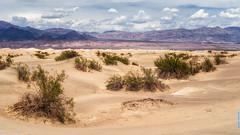 43 Degrees (pan shot) Tags: california usa sand desert travelusa panshot bushes deathvalleynationalpark dunes tamron2470 nikkor nikond750 deathvalley hot