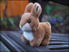 Day 109 (kostolany244) Tags: 3652018 onemonth2018 april day109 1942018 kostolany244 olympusomdem5markii europe germany geo:country=germany month bunny outside sitting 365the2018edition