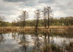 pond and trees in spring (Krzysztof Krr) Tags: sony a6000 nex selp18105g poznań poznan antoninek spring tree trees pond