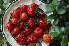 The Last of the Strawberries. (mcginley2012) Tags: strawberry nature food summer jadeplant plate red green seed organic homegrown fruit