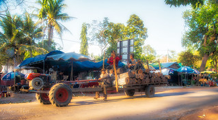 Cambodia- Transporting logs