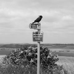 (Julien Delfort Photo) Tags: england angleterre eastbourne sussex noir blanc vintage black white monochrome konica fujifilm xm1 hexanon 40mm 40 18 f18 light ambiance hybrid adapter
