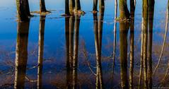 20160417DSCF6297-Edit (Gorshkov Igor) Tags: russia water river spring blue art trees trunk